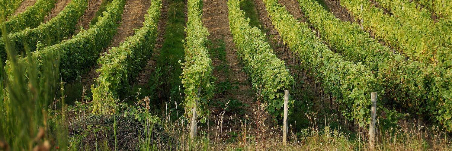 Le gite de groupe est a proximité de domaine viticole